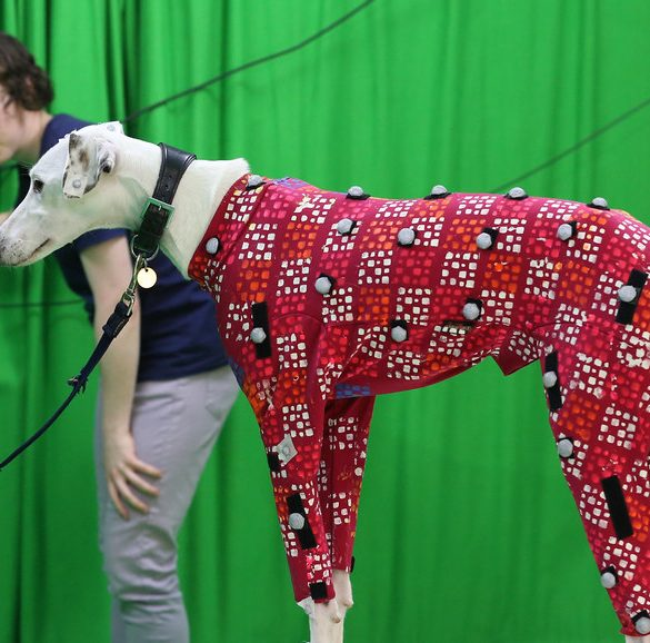 Dogs in games motion capture